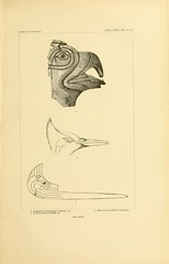 n188_w1150 (BioDivLibrary) Tags: antiquities indianart indians shellsinart smithsonianlibraries bhl:page=11258789 dc:identifier=httpbiodiversitylibraryorgpage11258789 manyhatsofholmes artist:name=katecliftonosgood taxonomy