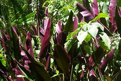 Purple (omar de luna) Tags: xilitla laspozas edwardjames slp mexico pentax jungle nature sierra
