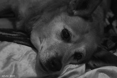 Tucco (Lorraine Dias) Tags: baby dog love tucco look partner loyal best friend
