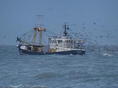 ARM 25 (Omroep Zeeland) Tags: arm25 zee meeuwen kotter