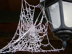 frosty spiders web (*LINNY *) Tags: frost snow ice cold web webs spider