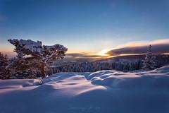Tree of Life (Sunrising Life) Tags: winter season tree nature sky sunrise clouds forest path fall temperature cold wind sun rays