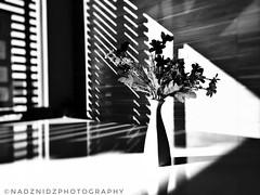 highlight and shadow (NadzNidzPhotography) Tags: highlightsandshadows highlightandshadow nadznidzphotography naturephotography highlights shadows artisticphoto arts artofphotography decor interiordesign design beautifullight blackandwhite b w bandw monochrome