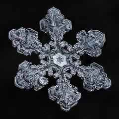 Snowflake-a-Day #3 (Don Komarechka) Tags: snowflake snow flake ice crystal naturegeometry symmetry fractal water frozen science mpe