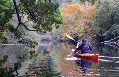 Kayak Dart Rob 13 (chris-parker) Tags: kayak river dart canoe kayaking canoeing devon south west perception