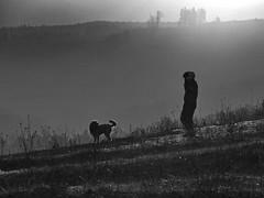 dogsitting (heinzkren) Tags: hund dog pet girl mädchen natur wanderung sundown sonnenuntergang nebel fog frau blackandwhite nature walk gieshübl austria niederösterreich loweraustria heide wald horizont skyline silhouette downhill call anruf gassi landschaft