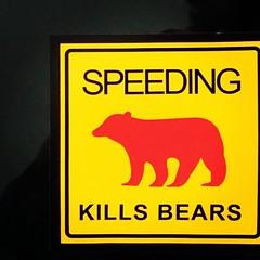 Speeding Kills Bears (booboo_babies) Tags: red sign yellow warning square sticker wildlife bears lofi squareformat speeding iphoneography instagramapp uploaded:by=instagram