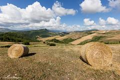 sentiero delle campagne calitrane (Vito Galgano) Tags: orata agricoltura rotoballa escursione calitri