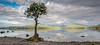 Lone Tree Millarochy Bay, Loch Lomond (npinks) Tags: tree multipleexposure hdr lochlomond millarochybay