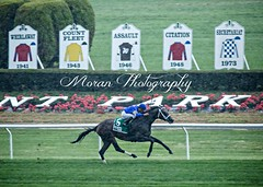 Sentiero Italia wins the Sands Point (EASY GOER) Tags: horses horse ny newyork sports race canon track running racing 5d athletes races thoroughbred equine thoroughbreds belmontpark markiii
