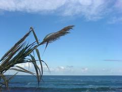 Das Mittelmeer (NEMEON Olivenl) Tags: ocean sea vacation sky holiday plant nature water meer wasser mediterranean mare urlaub natur pflanze himmel h2o greece oliveoil griechenland mittelmeer peloponnes       nemeonolivenl nemeon