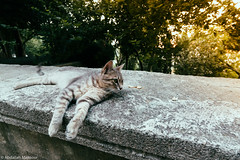 (Abdallah A. Mansour) Tags: cats animal animals cat turkey geotagged places istanbul stray polaroid669 presets vsco