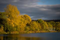 Weston Turville colour (Stuart Feurtado) Tags: autumn lake color colour reflection tree water boat nikon vibrant buckinghamshire reservoir foliage bucks weston d810 turvillle