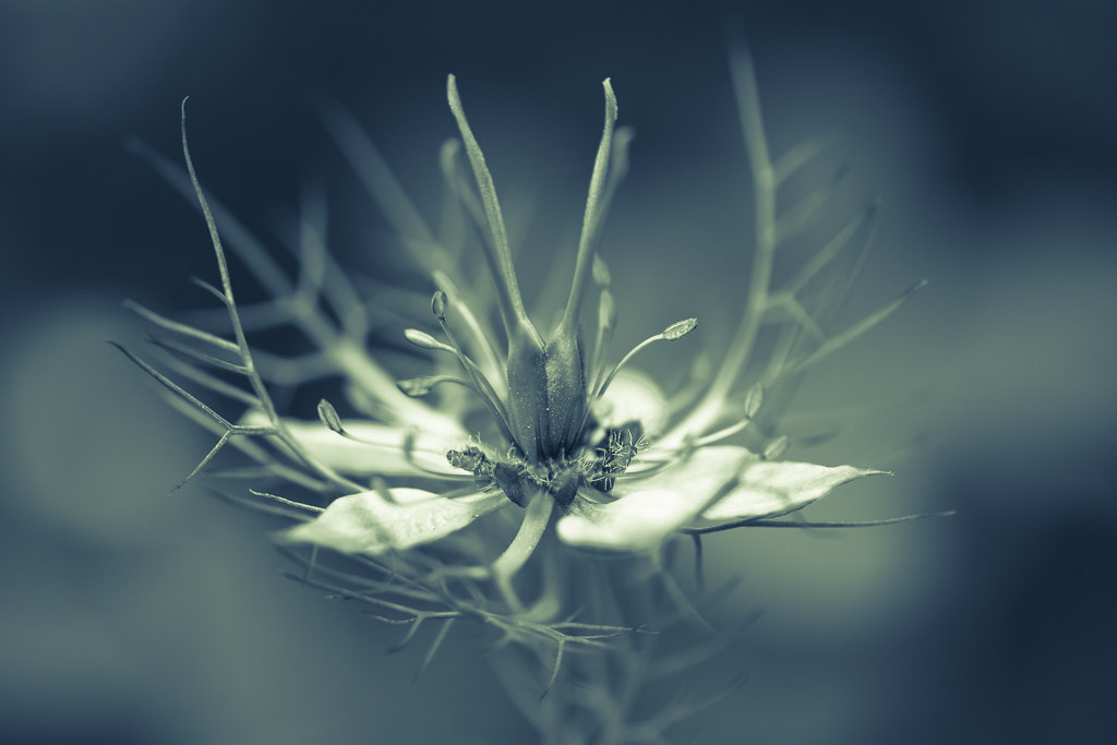 The World S Best Photos Of Damas And Macro Flickr Hive Mind