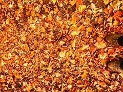 Favourite time of year (joynson83) Tags: autumn fall autumnal flintshire northwales springwatch mostyn berghaus autumnwatch