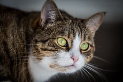 (mrozku) Tags: cat pussy