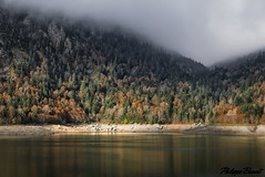Autumn in the forest (Philippe Basset) Tags: autumn mountain fall forest lac pyrenees pirineos ayous philippebasset