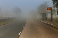 Autumn: foggy afternoon (H. Bos) Tags: autumn mist weather fog season herfst busstop autumncolors bushalte herfstkleuren almere weer oostvaardersplassen seizoen almerebuiten oostvaarders
