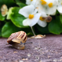 Early Spring (ALQABBANI) Tags: spring snail