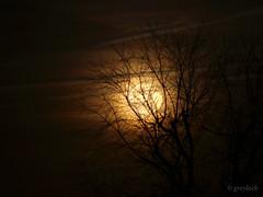"Thanksgiving Moon (the ""Beaver Moon"") (greyloch) Tags: sky orange photoshop experiment fullmoon lunar 2015 canonrebelt3i"