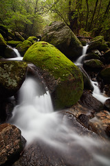 Yakushima Shiratani Unsuikyou (Eddie HBH) Tags: longexposure trees water japan forest river moss stream yakushima