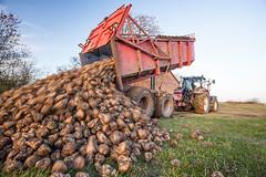IMG_9846 (Bad-Duck) Tags: vinter traktor mat hst ker stuka newholland maskiner kvll skrd flt jordbruk grda lantbruk rstid livsmedel sockerbetor fltarbete livsmedelsproduktion omstndigheter