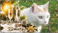 Bonne anne 2016 pour vous tous les amis de Flickr (Figareine- Michelle) Tags: chat bonne anne bestofcats catmoments coth5 vg~catsgallery fabuleuseenftesf