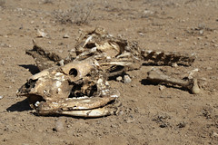 Drought Need Assessment (ActionAidSomaliland) Tags: drought climatechange actionaid actionaidsomaliland