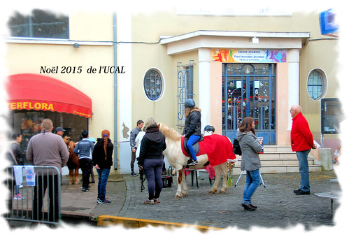 Manège & poneys (3)