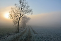Matin givr (Excalibur67) Tags: trees fog landscape nikon contemporary sigma arbres paysage brouillard givre blueribbonwinner greatphotographers levedesoleil d7100 1770f284dcoshsmc