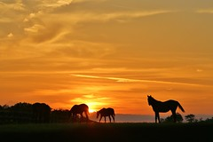 (Blue-Eyed Kentucky) Tags: horses sunsets kentucky lexingtonkentucky blueeyedkentucky bluegrass