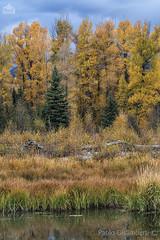 Alberi, trees (paolo.gislimberti) Tags: parchinazionali nationalparks grandteton paesaggi landscapes bosco wood autumn autunno autumnalcolors coloriautunnali