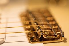 Golden Bokeh (Role Bigler) Tags: bridge canonef28100islmacro canoneos5dsr gitarre gold guitar macro stratocaster bokeh bokehlicious fender goldhardware goldstrings goldenbokeh guitarparts manfrottotripod optimastrings part tremolo vibrato vintagestratocaster