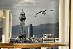 Torre Agbar, Barcelona - Spain (LeoniArt) Tags: barcelona gabbiano seagull skycraper agbar