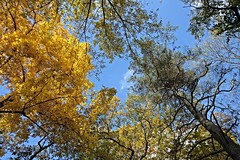 Herbst 6 (DianaFE) Tags: landschaft baum herbst laub dianafe dianae