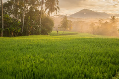 Sunrise in Bali (andy.d) Tags: bali sunrise landscape green agung indonesia beautiful countryside peace color trees