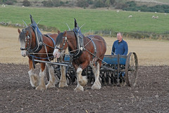 Seeding -  Working Horses Day 2016 (john_mullin) Tags: scotland scottish british horse hoses workinghorses heavyhorses clydesdale farm farming agriculture indaysgoneby horsepower teamwork animals cultivation harvest ploughing britishhorsesociety collessie fife