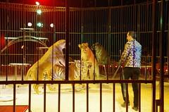 IMGP4808 (kanakacatherineb) Tags: cirque venise narbonne landri 2016 lions chameaux chiens dompteurs jongleur gymnaste