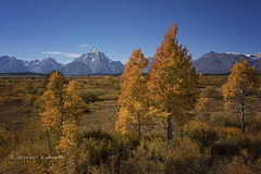from Hank to Hendrix... (J. Kaphan Studios) Tags: autumn fall fallcolors grandtetonnationalpark nationalparks nationalparkphotography mountains bigmountains colors colorful jacksonhole wyoming