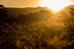 DSC01972 (miguelgbeas) Tags: amanacer salida del sol hora dorada reflejos contraluz sonyalphamexico sonya99 sal70400g