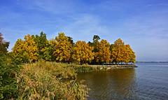 Embouchure de la Morges (Diegojack) Tags: paysages morges lman rivire embouchure automne parc indpendance tulipier virginie eau