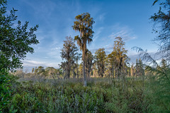 Early morning at Lake Park (tfhammar) Tags: lakepark florida early autumn scene tampa cypress spanish moss