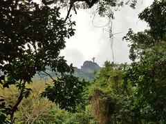 Through the treetops; Rio (JonathanGerard) Tags: brazil brasil nature tree canopy christtheredeemer depth statue green