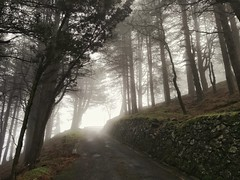 Verso Dinnamare (ME) - Sicilia  While I was going around by my bike.. (fabioscrima) Tags: fog trees serenity serene winter autumn christmas landscape mountains snow background gettyimages street composition italia italy nature