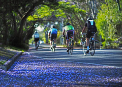 Spring ride_b_c (gnarlydog) Tags: duotamron135mmf45 riding bicycle bokeh shallowdepthoffield vintagelens manualfocus australia jacarandatree flowers road sport colorful