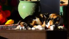 Cat Tisha (intui.pro) Tags: video miniature effect cranking