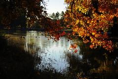 Upper Pond, Idlewild Park, Reno (Narodnie Mstiteli) Tags: idlewildpark renonevada sweetgumtree fallcolor hardwood deciduous