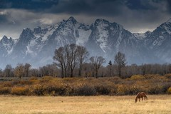 The Tetons (Elain) Tags: tetons horse fall