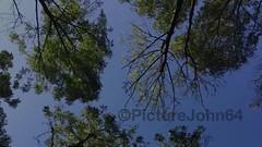 Autumn motion (PictureJohn64) Tags: paddestoelen almere nature natuur landscape picturejohn64 iphone herfst autumn sun zon zonsondergang sunset kemphaan flevoland flora fauna bloem flower wood bos boom tree