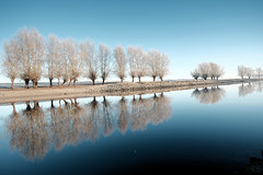 crisp, cold, clear morning (16126627) (felipe bosolito) Tags: reflection winter morning tree sunny cold blue